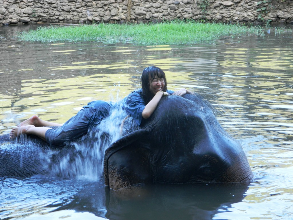 One of THE best experiences of my life - swimming with elephants!!