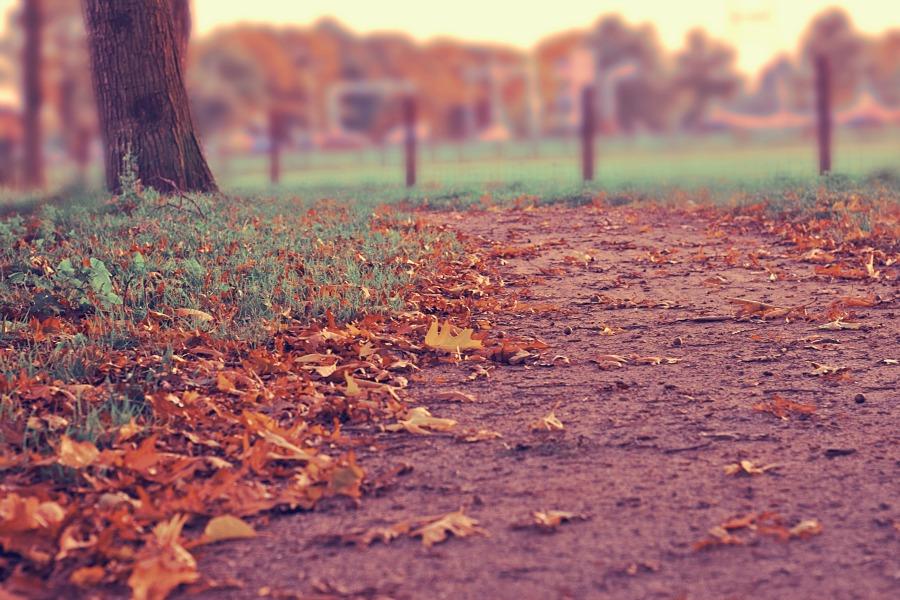 purple fall leaves