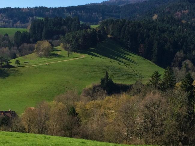Kirchzarten Countryside