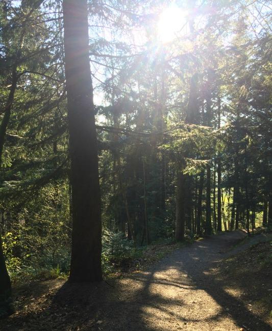 Kirchzarten's Black Forest