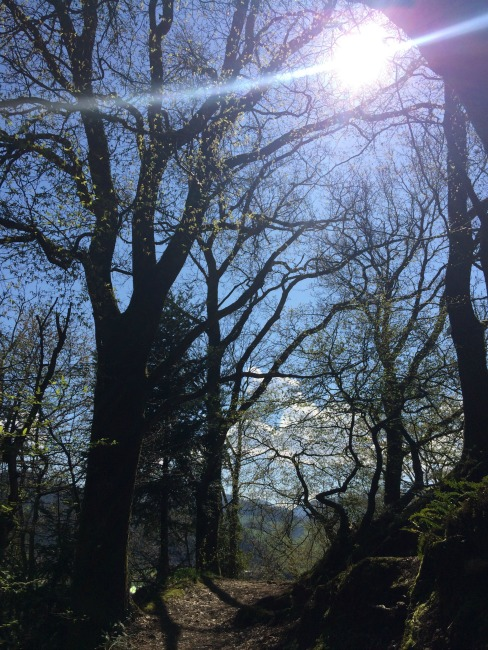 Backpacking through Freiburg's Black Forest