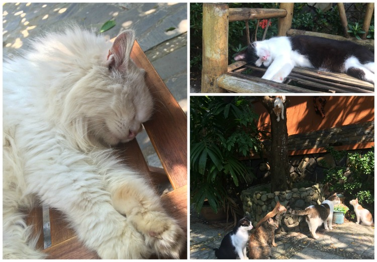 Jack's Cat Cafe in Hoi An