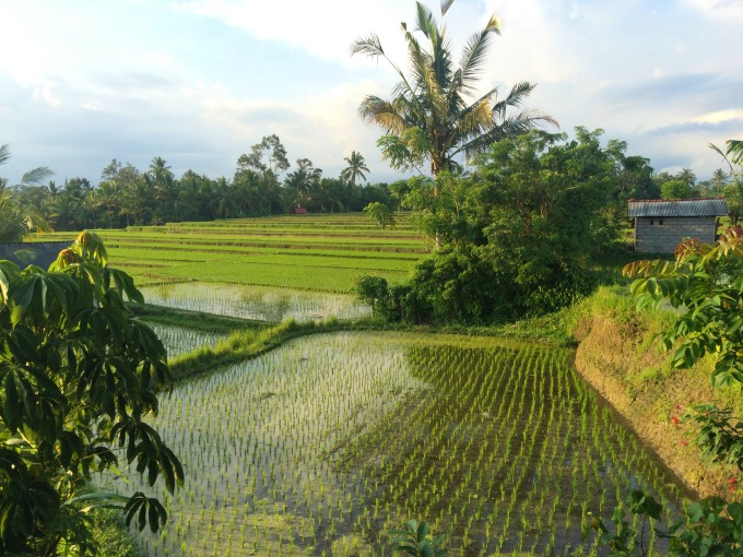 Traveling in Bali